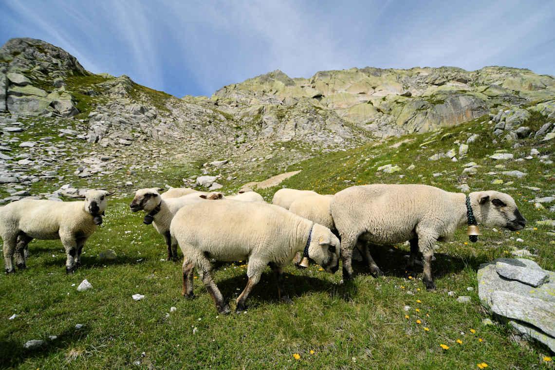 We wool the world - auf dem Weg hoch zum Sidelhorn